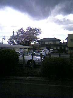 image/maocha-2006-04-21T13:54:46-1.jpg